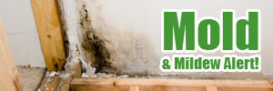 Mold & Mildew Alert in California!